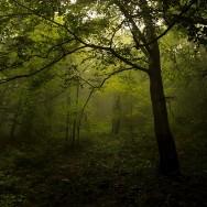 Opracowania glebowo-siedliskowe