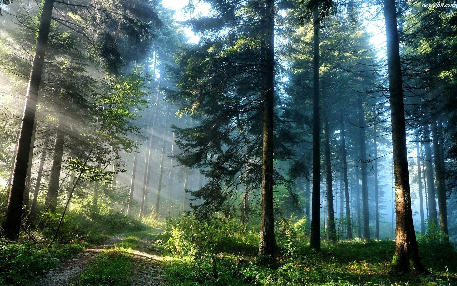 slonca-droga-las-drzewa-promienie