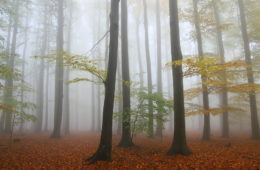 Plany urządzenia lasu