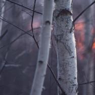Uproszczone plany urządzenia lasu i inwentaryzacje stanu lasu